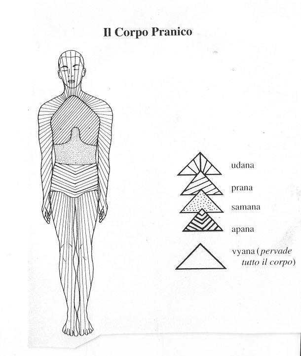 Il corpo pranico: Prana, Apana, Samana, Udana e Vyana (quest'ultimo pervade l'intero corpo)